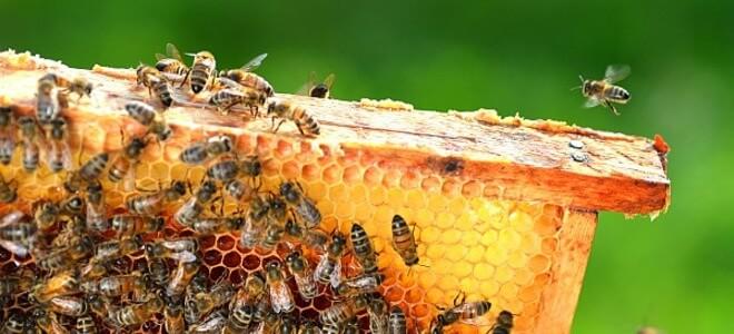 Pčelarstvo Srebrenica