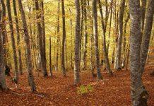Zaštita šuma u FBiH