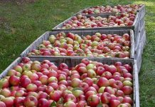 Izvoz voća i povrća