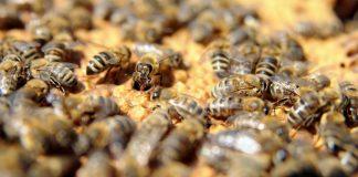 Pčelari