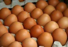 Izvoz piletine i jaja u EU
