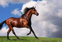 Izvoz konja